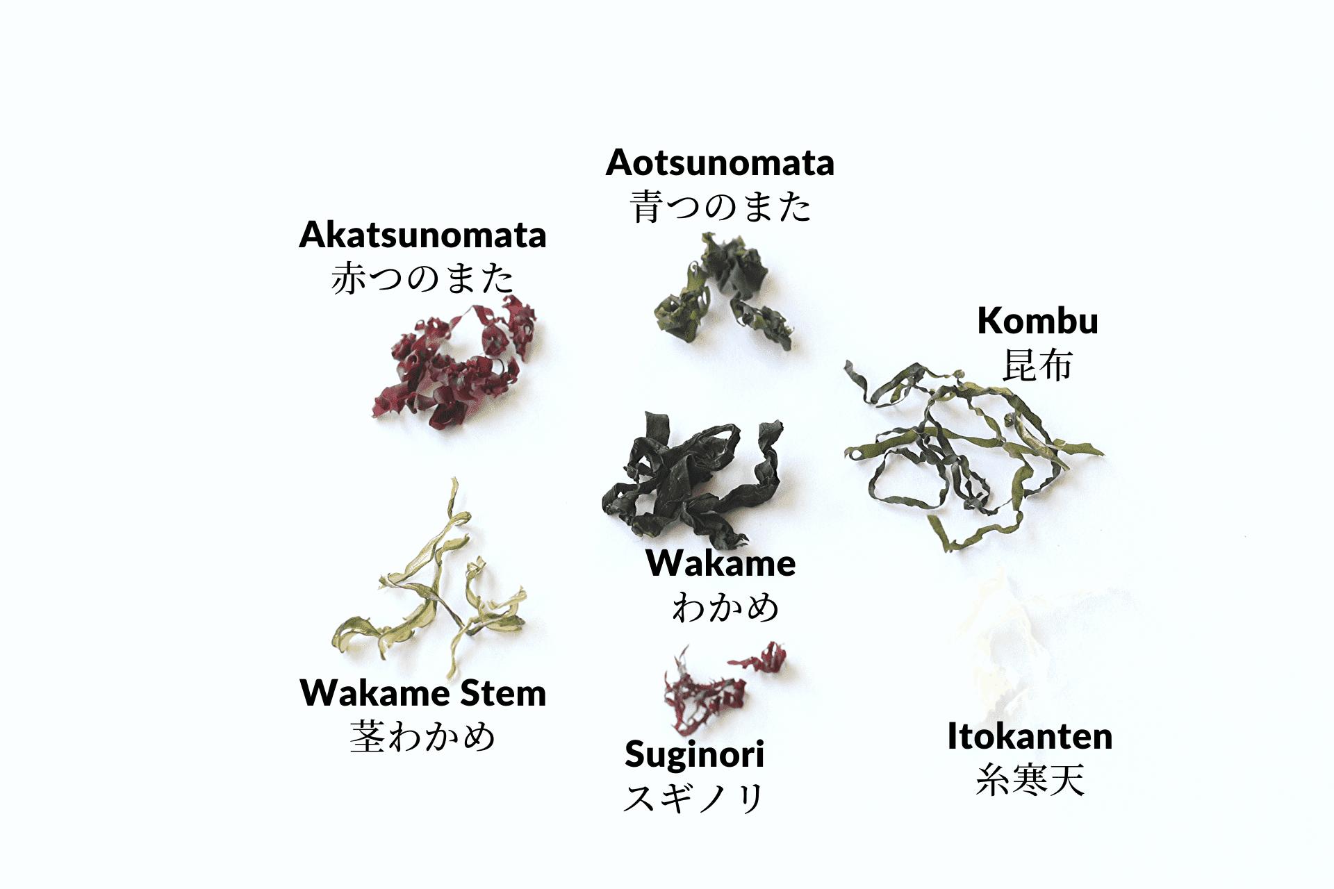海藻ミックスの中身:個々の海藻を並べている